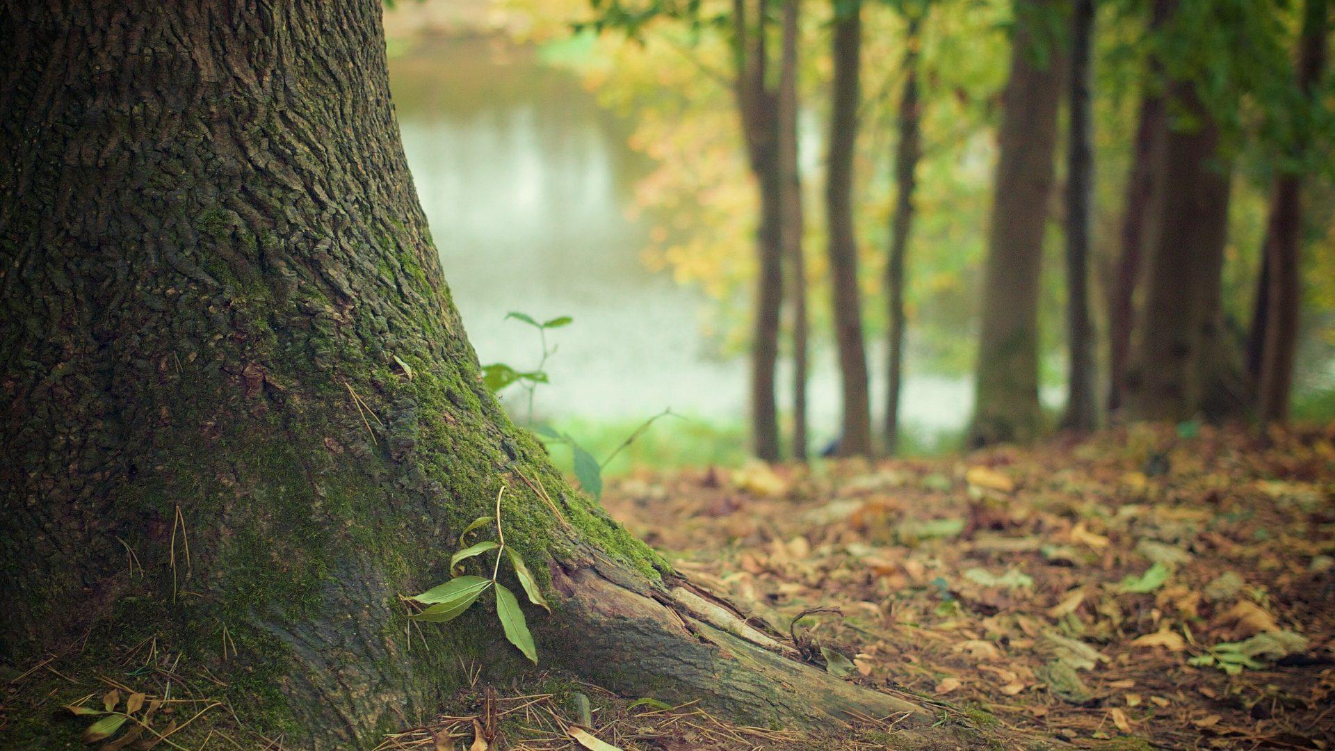 Lass Wurzeln in die Erde wachsen.